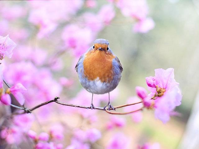 Treasures, Birds and Flowers