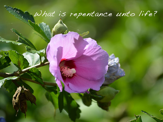 What is repentance unto life?